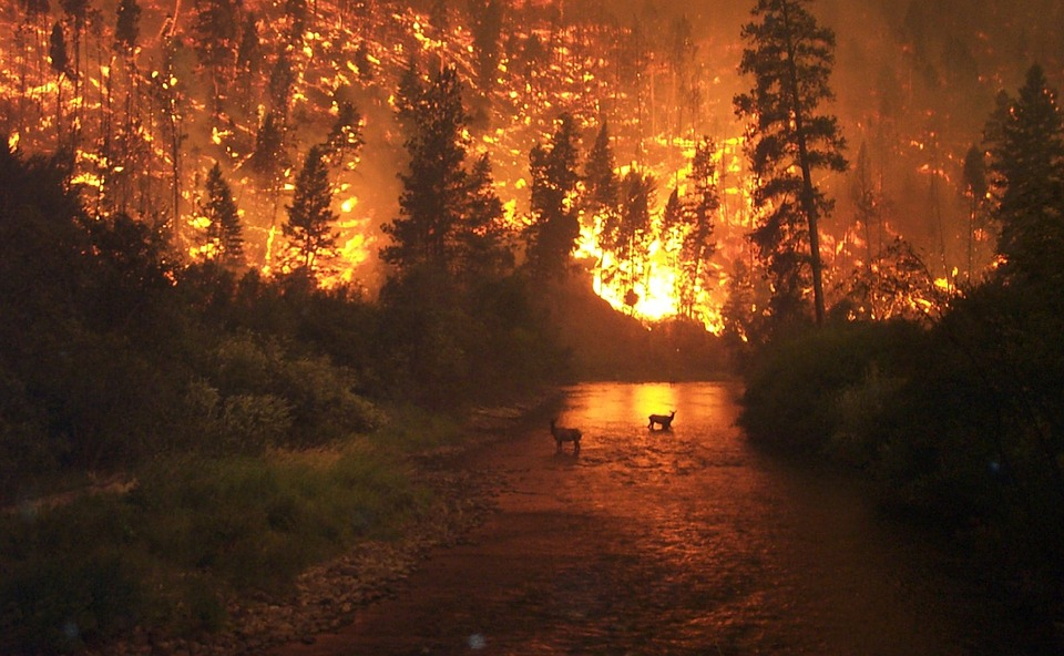 forest-fire-62971_960_720